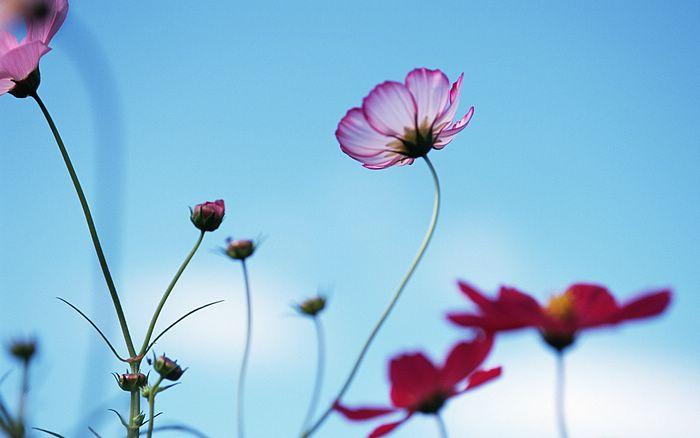 Enjoy & Appreciate the Beauty of Nature: A Flower Meditation