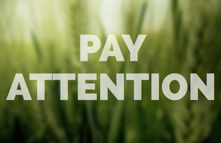 Pay Attention in Meditation