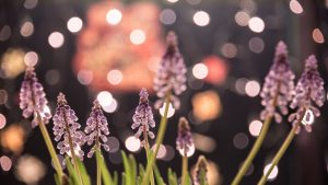 flowers and lights
