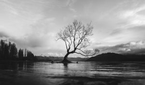black and white river tree